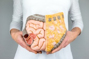 Woman holding model of human digestive system colon intestines
