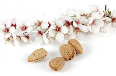 Almonds still in shell lay next to flowering almond tree branch