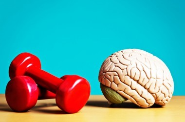 Brain next to a set of hand weights