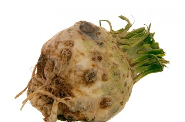 Celeriac super foods you have never heard of