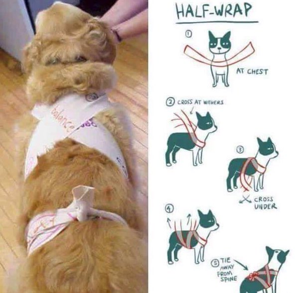 DIY dog calming wrap for thunderstorms and fireworks courtesy of PAWS