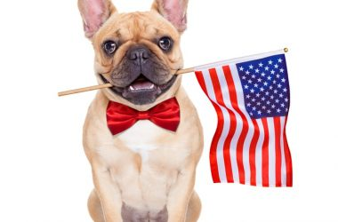 Patriotic Fourth of July French Bulldog with American flag