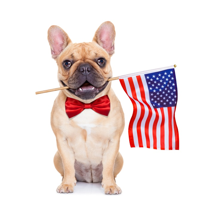 What Can I Do For My Dog On Fourth Of July