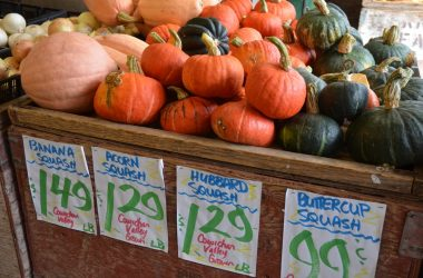 A variety of colorful delicious squash for sale