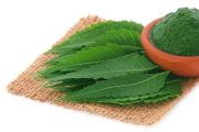 Medicinal neem leaves may fight cancer