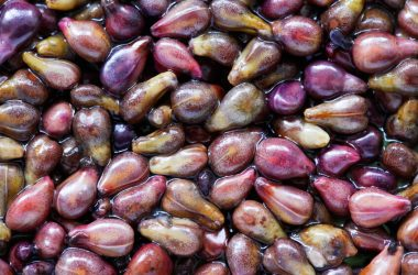 Grape seeds used for blood pressure lowering grape seed extract