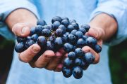 Woman holding a bunch of dark purple grapes