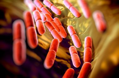 Unhealthy gut bugs can trigger diseases