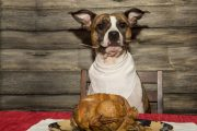 Dog sits in front of Thanksgiving turkey with fork in mouth