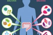 Illustration of intestinal flora and gut health