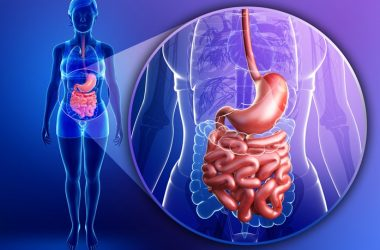 Diagram of digestive system to illustrate digestive health