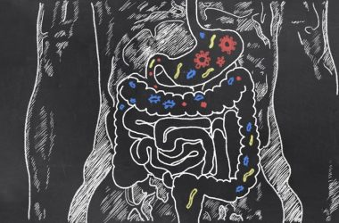 Sketch of digestive system with butyric acid producing gut bacteria