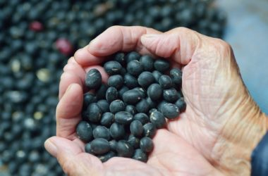 Hands holding black beans one of the potassium rich foods