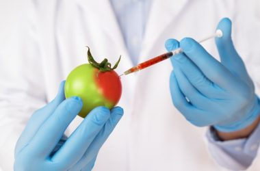 Tomato being injected in a lab to illustrate GMO foods