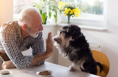Senior man recovering from a heart attack with his dog