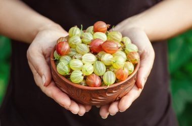 Woman holding a bowl of cholesterol controlling Indian gooseberries