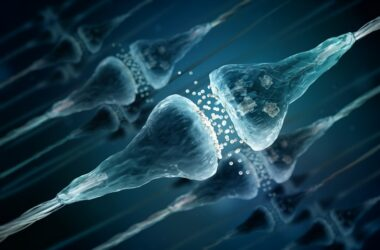 Synapses and dendritic spines in neuron cells to illustrate memory preservation