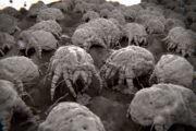 Microscopic view of dust mites found in bedding